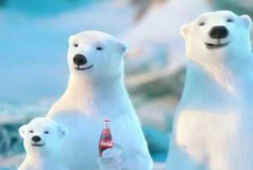 Die Coca-Cola Polarbären sind wieder am Start