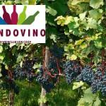 Coop-Weinclub Mondovino und NZZ arbeiten künftig zusammen