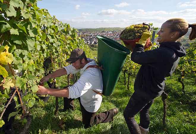 2015 wird ein top Weinjahrgang