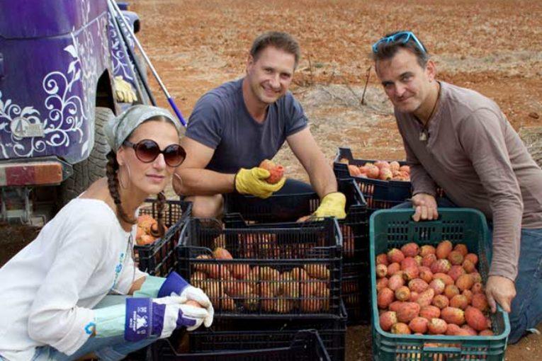 Das Team von LAW Gin bei der Kaktusfeigenernte