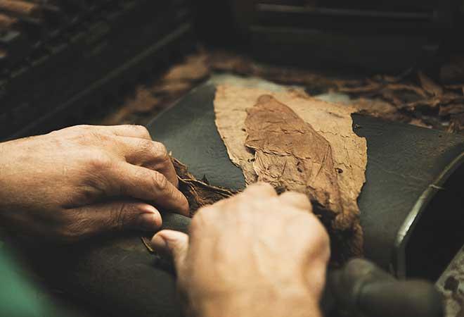 Zigarren werden von Hand gerollt.