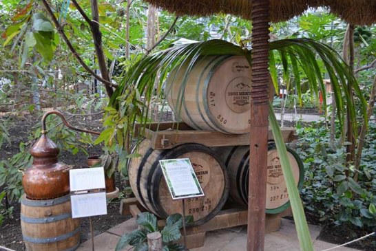 Rugen Distillery lässt Whisky in den Tropen reifen