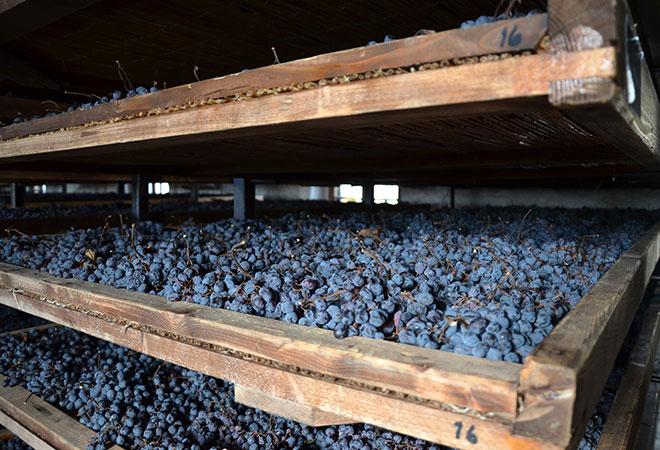 Amarone Trauben beim Trocknungsprozess