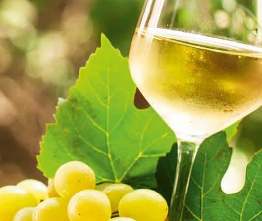 Muscat Wein: Vielfältig und geheimnisvoll