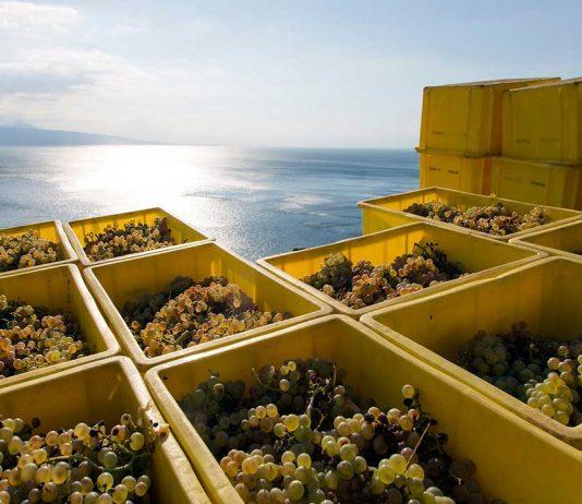 Waadtländer Weinbauern freuen sich auf Super-Jahrgang 2018
