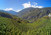 Dünne Luft - Weinbau in hohen Lagen